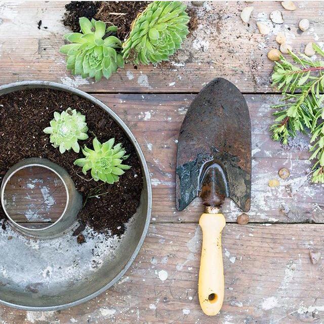 vintage ring pan