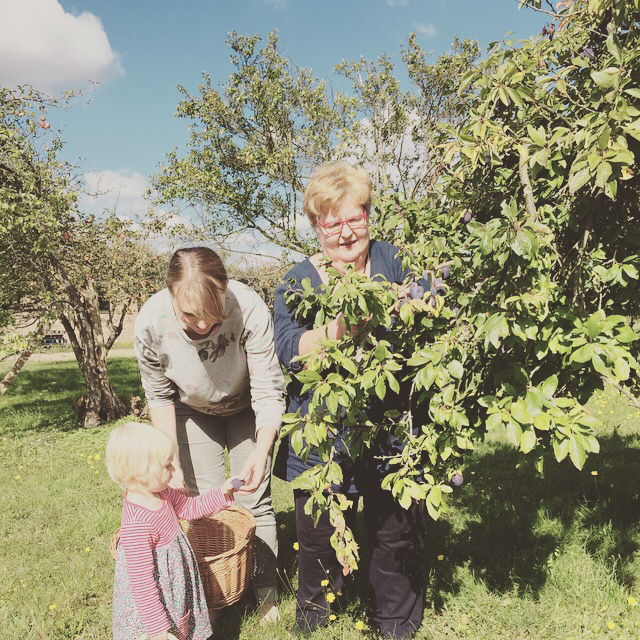 foraging in an english orchard